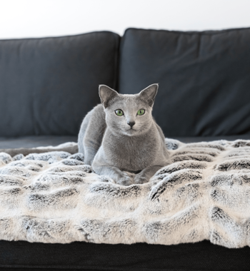 FIBI Cat Blanket